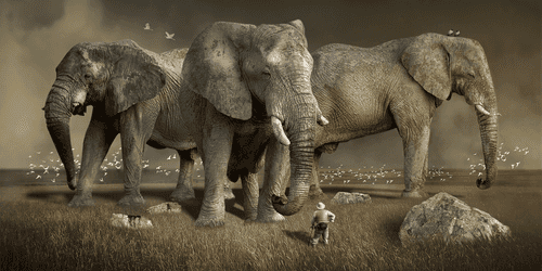 The state of Hadoop distributions